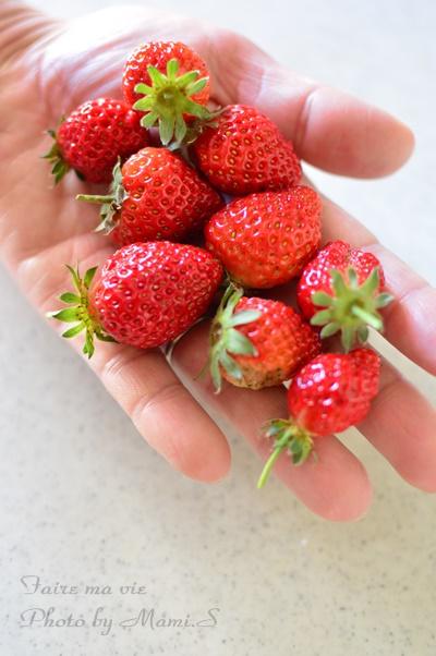 家庭菜園のイチゴ