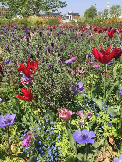 赤レンガ倉庫付近の草花