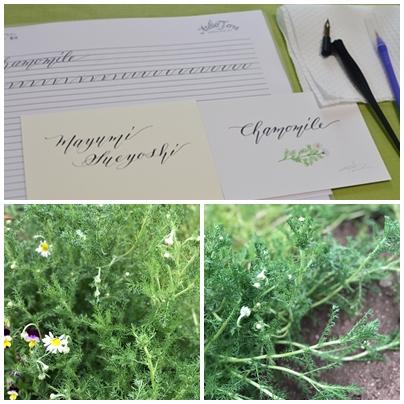 植物アロマとカリグラフィー