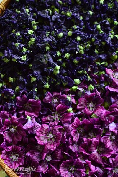 マロウブルーの花