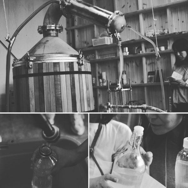 クロモジ精油製造