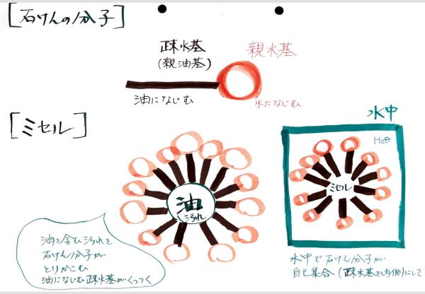 石けんの分子とミセル構造